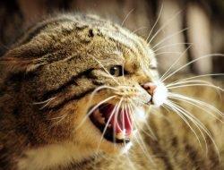 Agresif Kedilere Yaklaşma Yolları