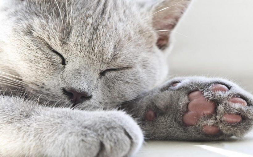 Kediler ile birlikte yaşamanın sağlığa 10 faydası