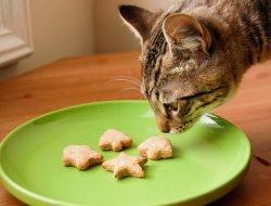Kedi Maması Yapımı