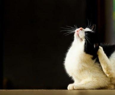 Kedi Parazit Kontrolü