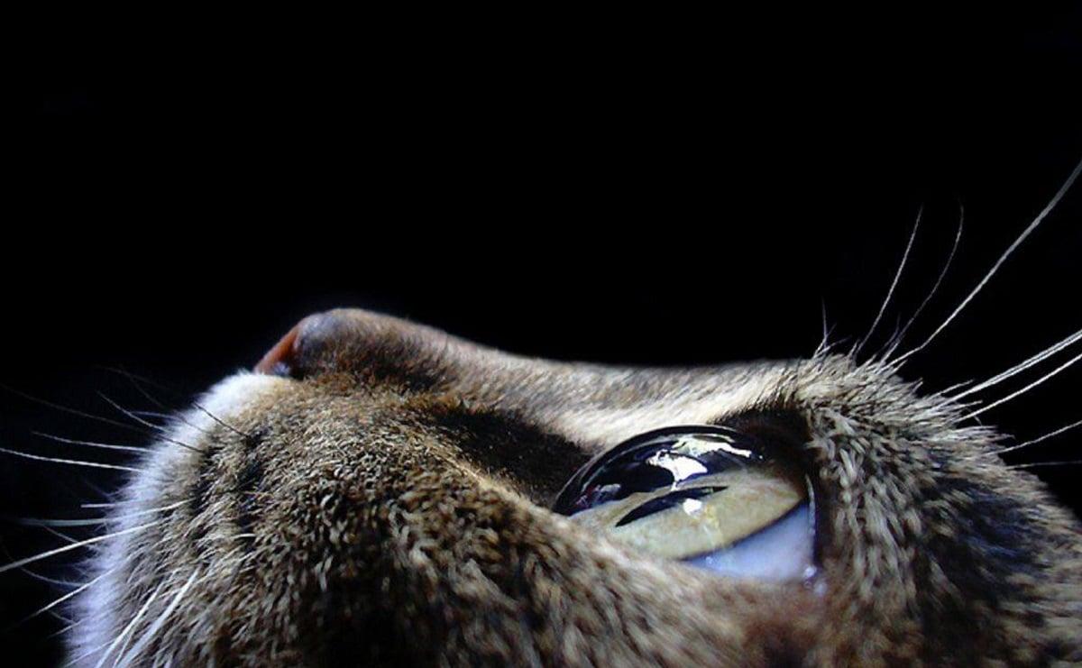 Kedilerde En Sık Görülen Hastalık Belirtileri