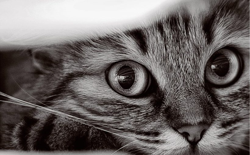 Kedinizin Sizi Sevdiğini Nasıl Anlarsınız