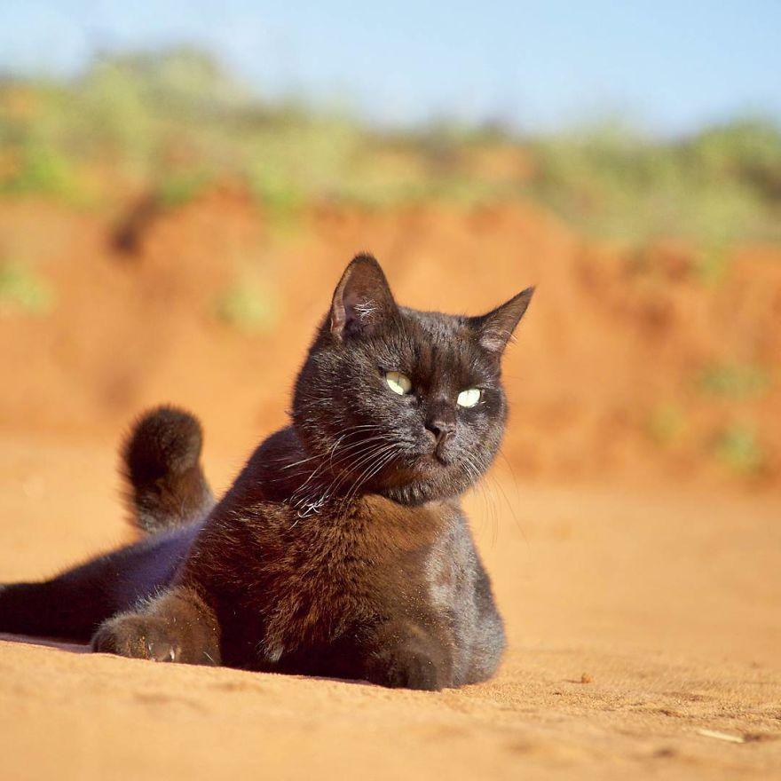 2,5 Senedir Avustralya'yı Karış Karış Gezen Maceracı Kedi ve İnsanı