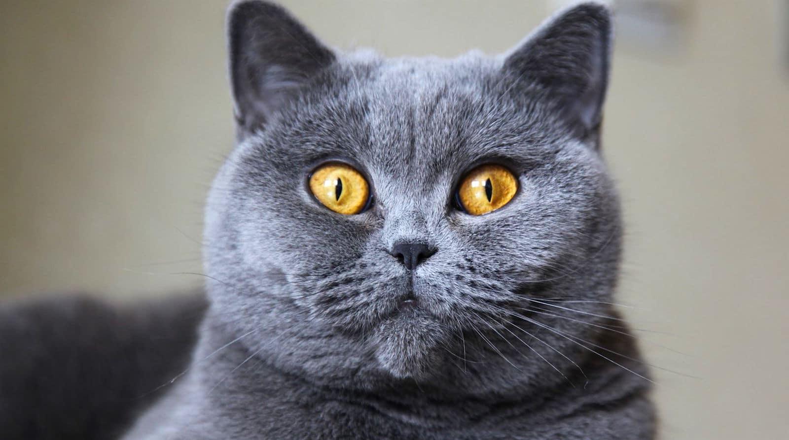 Kedilerin türleri: Evcil hayvanlar hakkında bilmeniz gerekenler