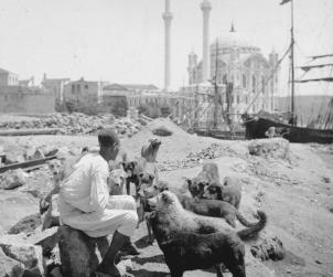 İstanbul'un Köpekleri - Ortaköy