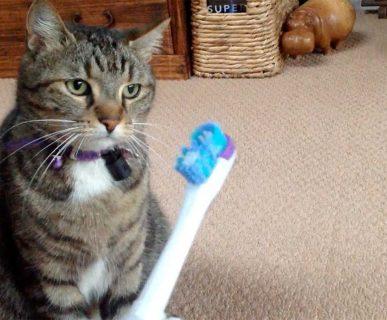 Kedilerde Diş Fırçalama