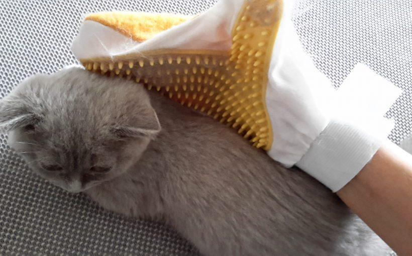 Kedilerin Az Tüy Dökmesi İçin Yapılması Gerekenler