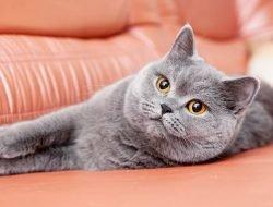 Kedileri Strese Sokabilecek Şeyler