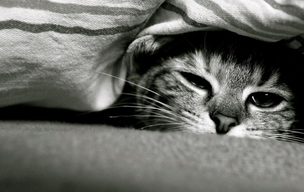 Kedilerin Tek Kalması