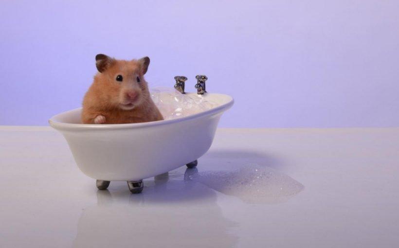 Hamster Yıkanır mı?