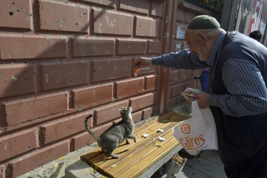 Camiye Giderken Bulduğu Kedi Hayatını Değiştirdi