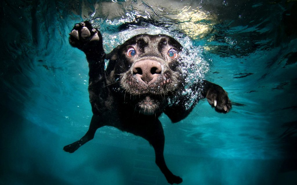 Köpeklerde Boğulma