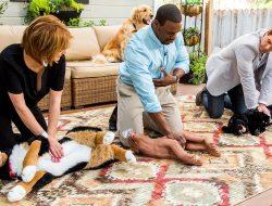 Köpeklere Kalp Masajı Nasıl Yapılır?