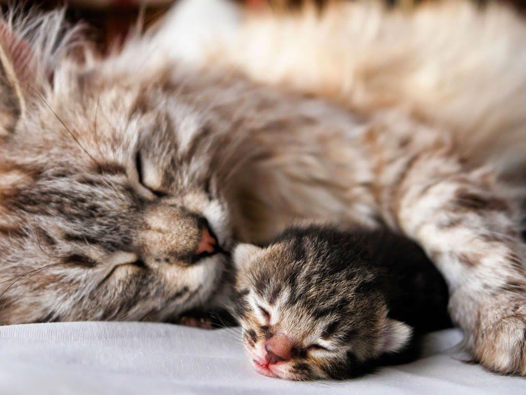 Kediler Neden Geceleri Hareketlidir?