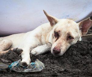 Nihayet: Hayvanları Öldürenlere 10.5 Yıla Kadar Hapis Cezası Geliyor