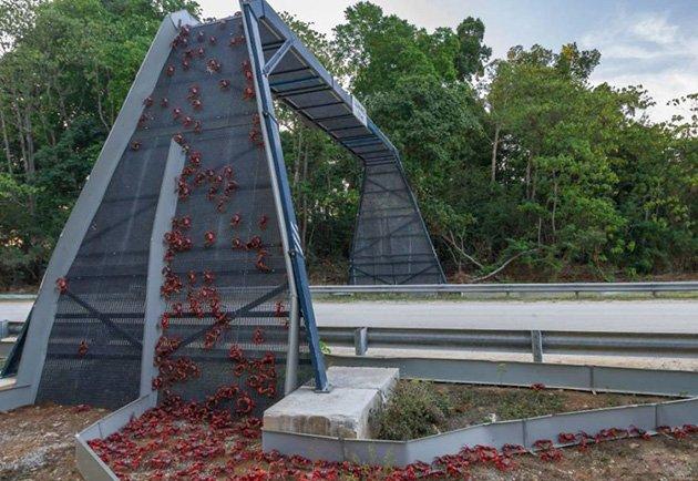 Yengeç Köprüsü - Christmas Adası