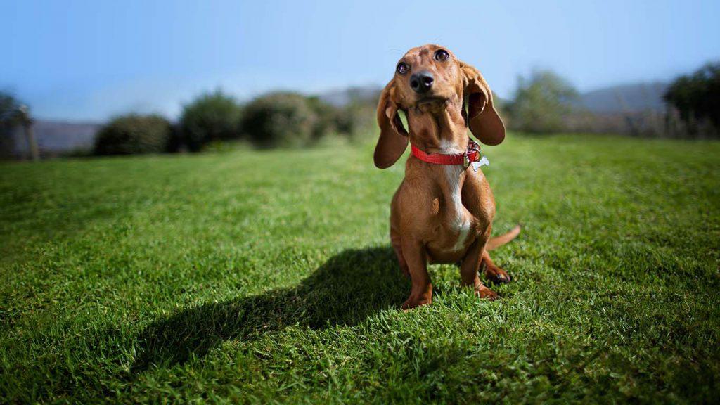 Köpek Bakımı ve Sağlığı