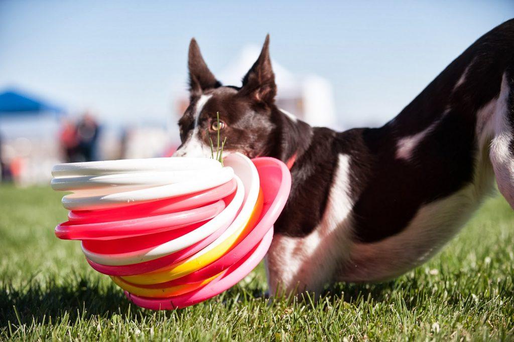 Köpekler için Egzersiz Önerileri
