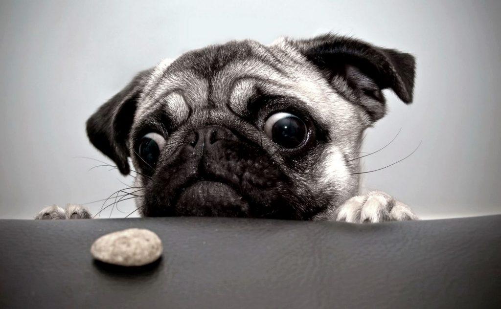 Köpeklerin Aşırı/Sürekli Havlaması ve Çözümü