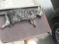 Bursa'da Ayakları Kesilmiş Kedi Yavrusu Bulundu