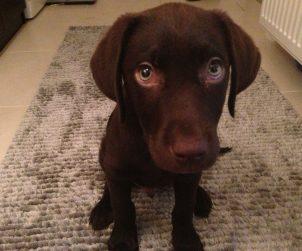 Köpekler Neden Tüy Döker?
