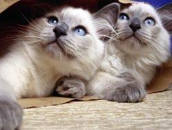 Kedileri Birbirine Alıştırmak