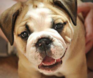 Köpek Yaşı Hesaplama