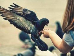 Güvercin Beslerken Bilmeniz Gerekenler