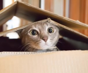 Kedilerle Nasıl Oyun Oynanır?