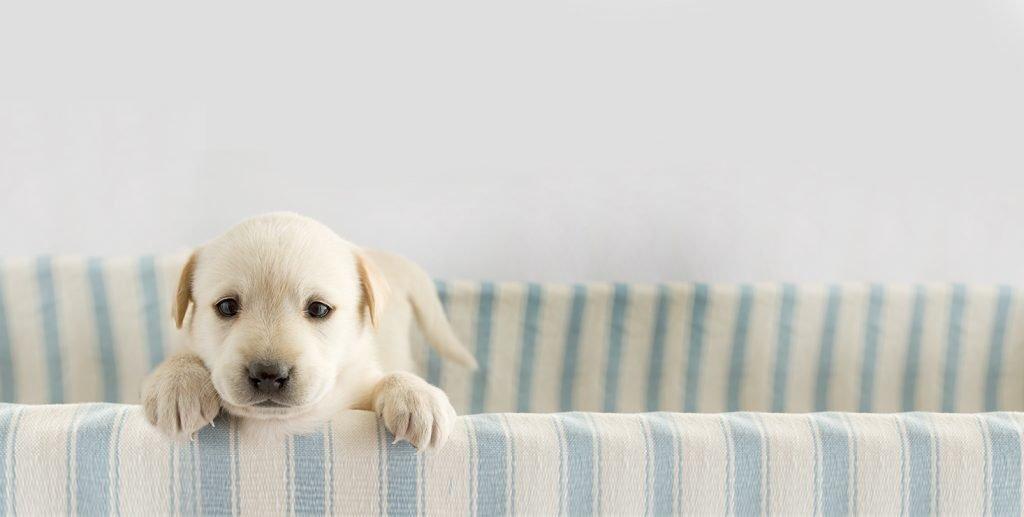 Yavru Köpek Bakımı