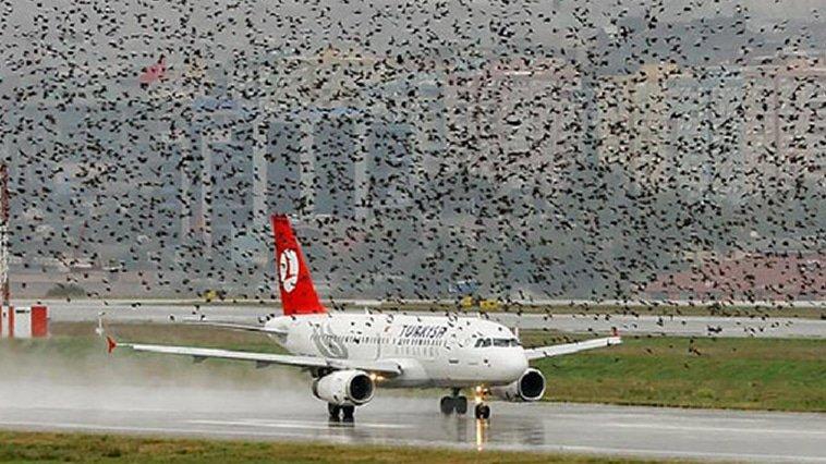 Kuşlara Demeliyiz ki Siz Artık Buradan Uçmayın!