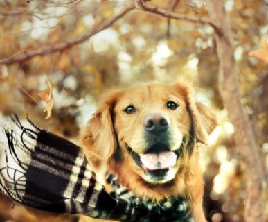 Kış Aylarında Köpek Bakımı