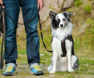 Köpek Eğitimi Nasıl Verilir?
