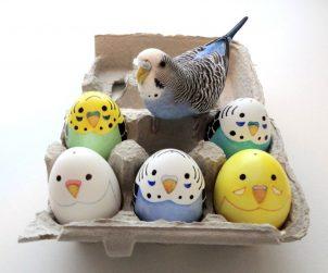 Muhabbet Kuşları Yumurtlama Süreci & Hazırlığı
