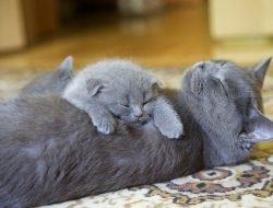 Kedi Kumu Seçimi