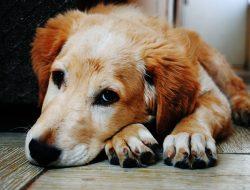 Apartmanda Köpek Besleme İle İlgili Hukuk Kuralları