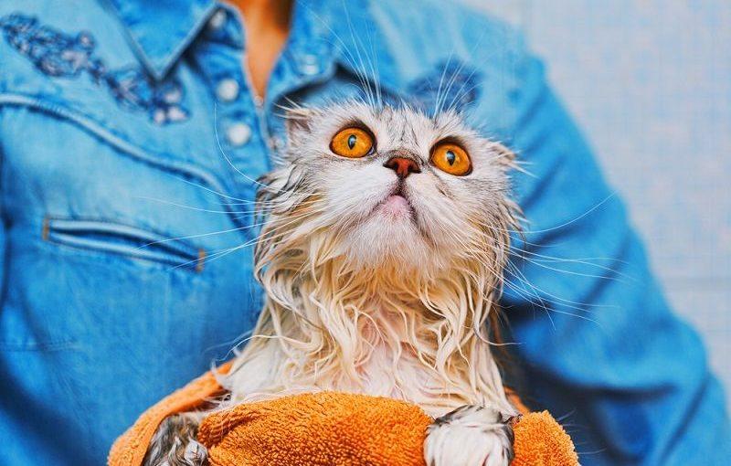 Kedi Nasıl Yıkanır?