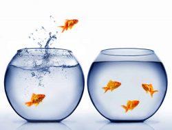 Balıklar Akvaryumdan Neden Atlar?