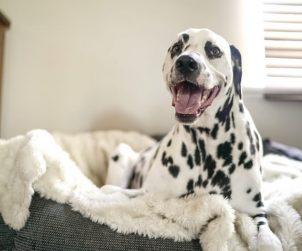 Evdeki Malzemelerle Nasıl Köpek Yatağı Yapılır?