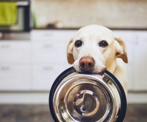 Köpekler için Ek Besinler