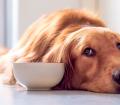 Köpeğiniz için Kilo Aldırıcı Vitaminler