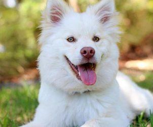 Sağlıklı Köpek Tüyleri için Vitamin
