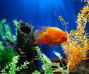 Balıklarda Sümüklü Deri Hastalığı